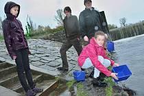 Děti ze základních škol vysazují malé ryby do řeky Ohře pod jezem v Žatci. Jeho podoba se možná brzy změní; investor tam chce postavit vodní elektrárnu.