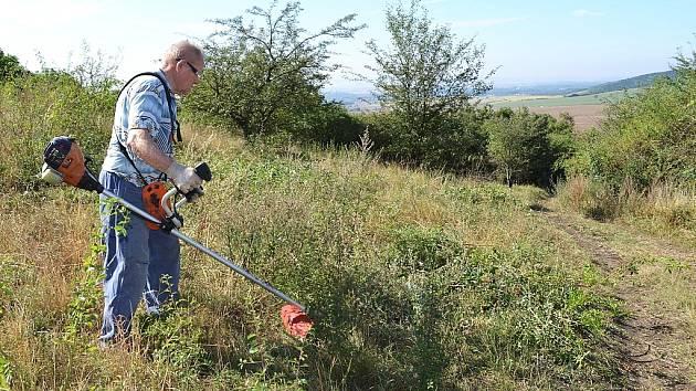 Dělníci s křovinořezy a motorovými pilami odstraňovali náletové dřeviny, aby v lounské části Českého středohoří ochránili zarůstající cenné stepi.
