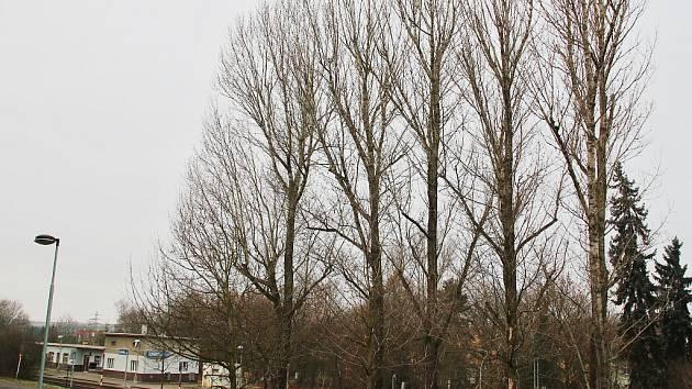 Topoly v lounské Poděbradově ulici, které nechá město pokácet