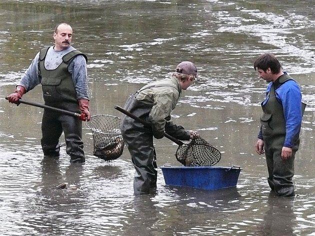 Rybáři přebírají ryby při sobotním výlovu nádrže, ležící nedaleko návsi ve Vroutku.