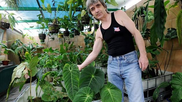 Na pět set anturií neboli toulitek ve dvou sklenících pěstuje Ladislav Holý z Dobroměřic. Jeden druh nese jeho jméno.