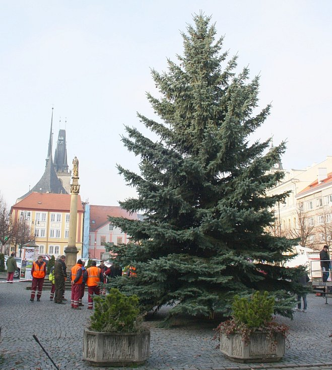 Vánoční strom v Lounech pro rok 2014