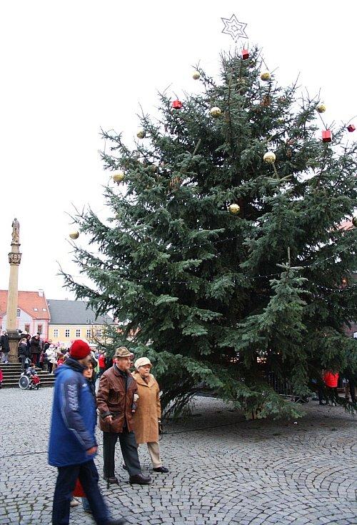 Vánoční strom na lounském Mírovém náměstí