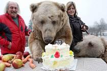 Medvědí bratři Tom a Jerry z Veletic na Žatecku při oslavě 20. narozenin