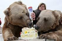 Medvědí bratři Tom a Jerry z Veletic na Žatecku slavili narozeniny