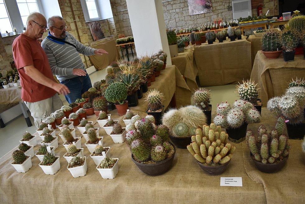Regionální muzeum K. A. Polánka v Žatci a Kaktusáři Žatecka zvou na výstavu Kaktusy a sukulenty, která probíhá ve Staré papírně.
