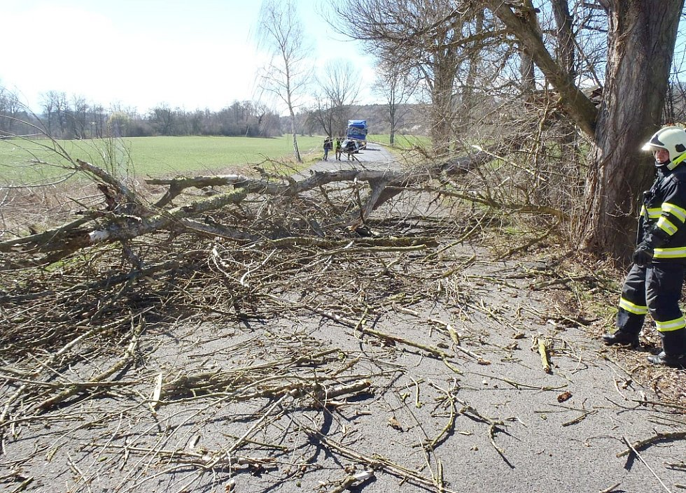 Hasiči už v pondělí 30. března likvidovali strom, který odpoledne padl na silnici mezi Novým Sedlem a Břežany na Žatecku.