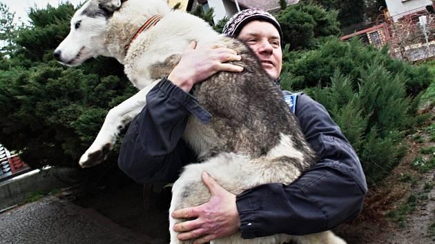 Musher Roman Habásko se svými sibiřskými husky doma v Podbořanech.