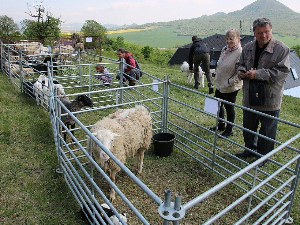 Na Rané si lidé mohli prohlédnout různá plemena ovcí i koz