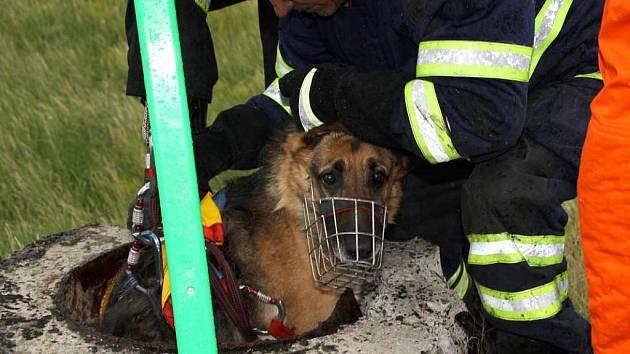 Hasiči vytahují psa na povrch. Po celou dobu záchranné akce byl klidný. Košík dostal jen preventivně.