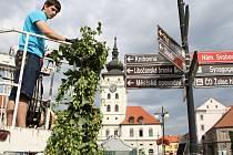 Martin Klouček zavěšuje chmelový štok jako ozdobu na sloup s informačními směrovkami na náměstí Svobody v Žatci.