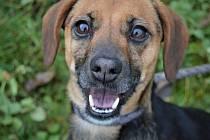 Usměvavá psí holka Kimberly hledá nového majitele.