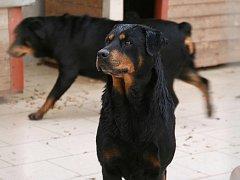 Psi, kteří pokousali starší ženu v Radonicích a která následně zemřela, jsou nyní v Útulku pro opuštěná zvířata v Jimlíně.