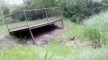 Žatecká lokalita Bufo je dnes zarostlá, lidé si navykli tam odvážet odpad. To by se mělo změnit.