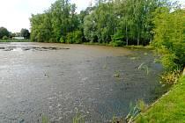 Současný nevábný stav rybníka v Radíčevsi