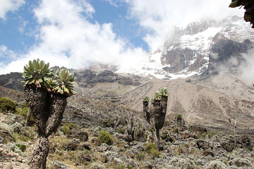 Každý den výstupu na Kilimandžáro šli dobrodruzi naprosto jinou krajinou