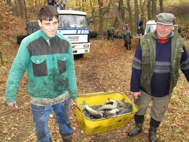 Josef Motyka (vlevo) a Jiří Geisler odnášejí k nákladnímu autu amury, které včera vylovili z rybníka u Nové Vsi poblíž Podbořanského Rohozce.
