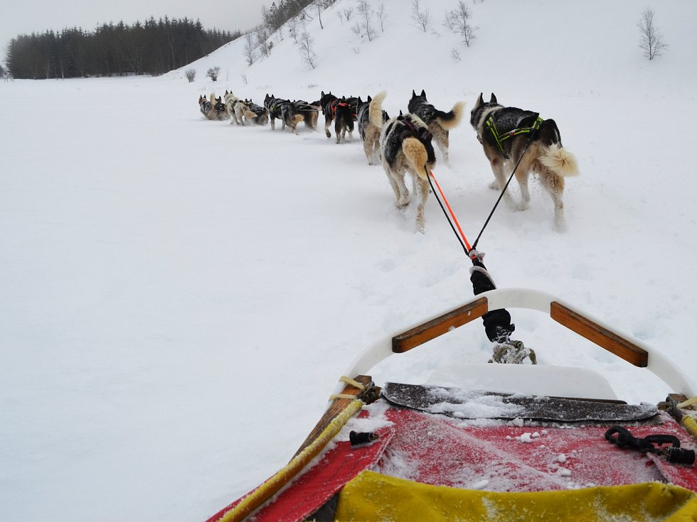 Musher Roman Habásko vyráží trénovat se svým psím spřežením do Krušných hor