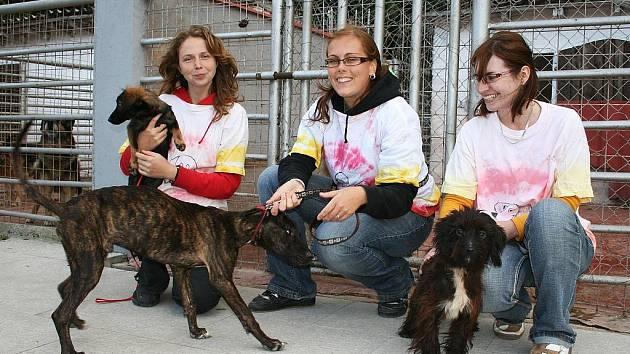 Jitka Kržová, Monika Doubravová a Jana Říhová (zleva) pomáhaly jako dobrovolnice v útulku pro opuštěná zvířata v Jimlíně u Loun.