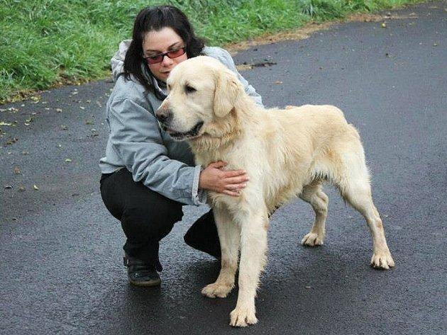 Goldy je nejspíše kříženec GR, asi 5 let starý pes, v kohoutku 72 cm, čipovaný, hubený. Je kontaktní, snášenlivý, bez projevů agrese. Miluje i společnost jiných psů. Pejsek je čipovaný, očkovaný a odčervený.