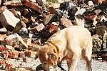 Nejen živé zavalené nebo ztracené osoby umí vyhledávat psí záchranáři. Poradit si musí také s hledáním lidí bez známek života, trénovali to na sutinovém trenažéru ve Chbanech. Pach mrtvých simulují při tréninku speciální chemické tablety.