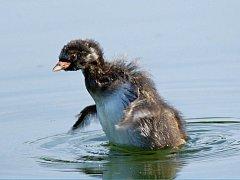 Lounské muzeum připravuje výstavu fotografií z ptačího světa