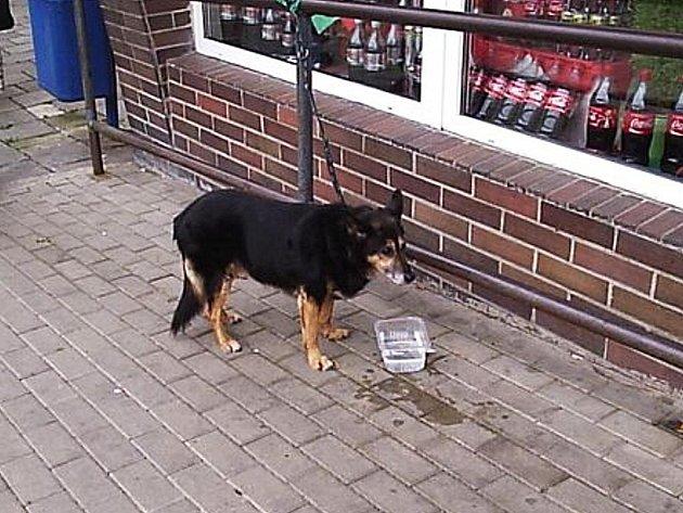 Opuštěný pes na lounském Tyršově náměstí
