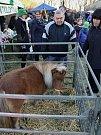 Lidé si mohli pohladit poníky nebo třeba lamu