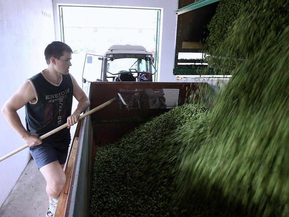 Brigádníci mají plné ruce práce také na česačce v Agrofarmě Karla Dittricha v Lenešicích.