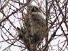 Mýval severní se objevil ve volné přírodě u Libočan nedaleko Žatce.
