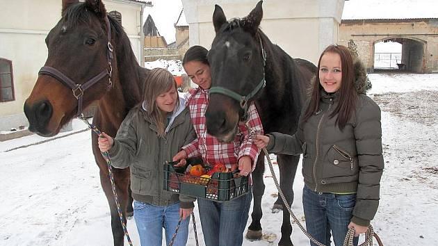Pamlsky koním předaly studentky M. Kolbábková, L. Bláhová a E. Dvořáková.