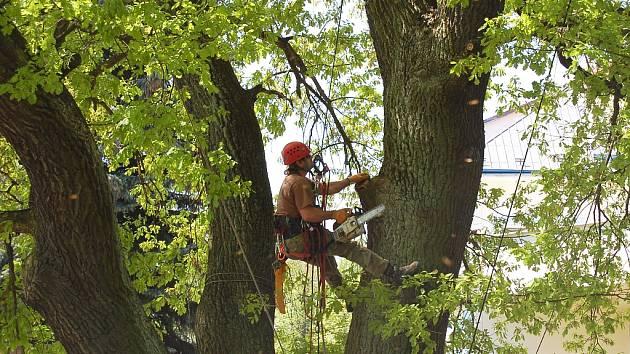 Doslova ekvilibristická čísla častokrát předvádějí lezci zkušení arboristé při ošetřování stromů.