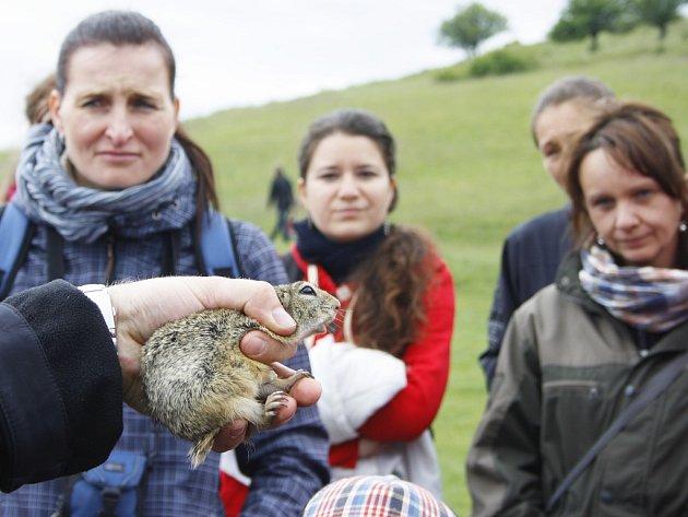 V polovině května proběhly na Rané Slavnosti stepí. Lidé se mohli mimo jiné seznámit také se sysly, kteří tam žijí.
