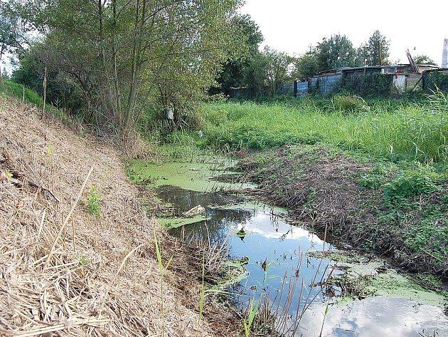 Zanesená strouha, která má odvádět vodu ze Staňkovické a Lounské ulice do Ohře.