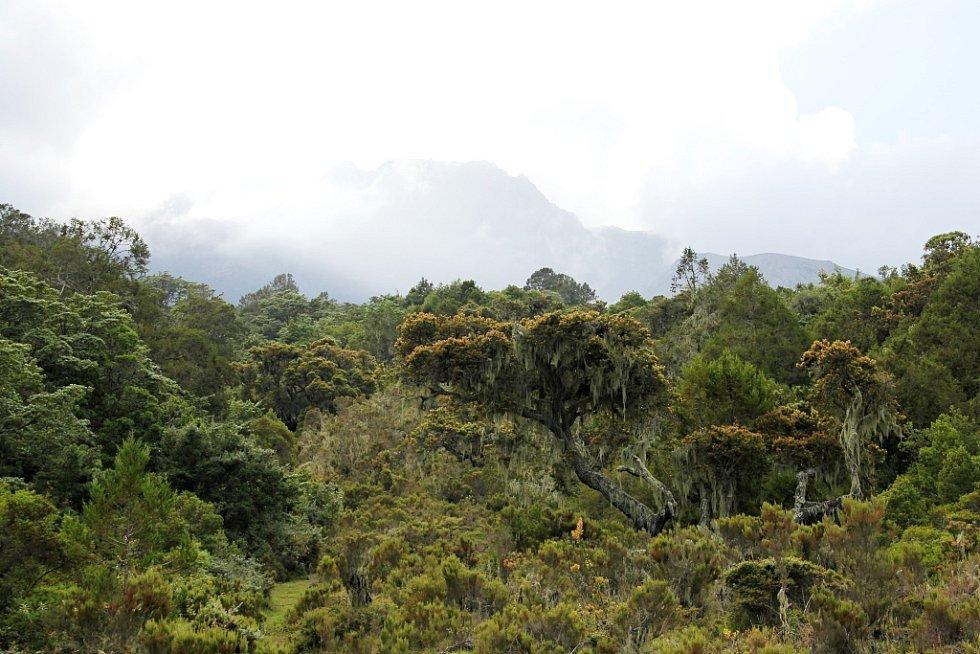 Cesta na Mount Meru v Tanzanii