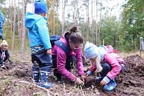 Děti s rodiči pomáhaly s obnovou městských lesů.