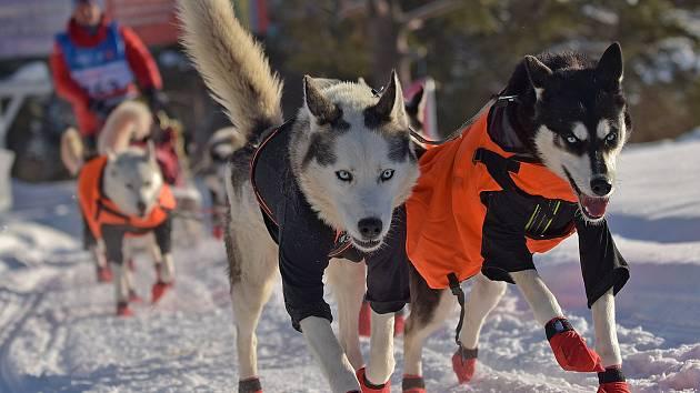 Podbořanský musher Roman Habásko se svými sibiřskými husky dojel závod Finnmarkslopet - 567 km.