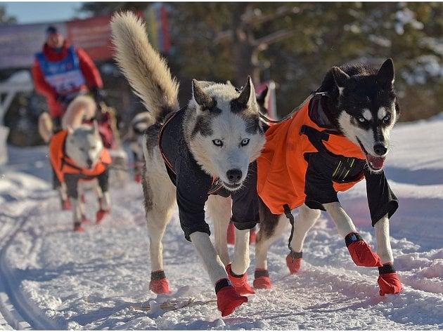 Podbořanský musher Roman Habásko se svými sibiřskými husky dojel závod Finnmarkslopet - 567km.