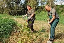 Přemysl Hautke (vpravo), Jan Rejcha a další členové Ekologického centra Žatec pracují na levém břehu Ohře nad jezem v Žatci.
