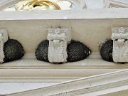 Hnízda jiřiček na budově knihovny v Žatci