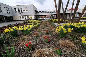 Květinová výzdoba na žateckém náměstí Poperinge.