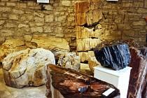 Muzeum Zkamenělý les v jedné z bašt lounského opevnění skrývá spoustu unikátních exponátů