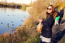 U řeky je dobře. Atrakcí jsou labutě i kachny. V Žatci oblíbeným cílem je zimoviště na Ohři u fotbalového hřiště Slavoje Žatec.