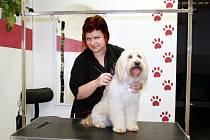 Eva Beranová, která dlouho nemohla najít práci, si v Lounech letos otevřela psí salón. S rozjezdem podnikání jí pomohla dotace  od Úřadu práce v Lounech