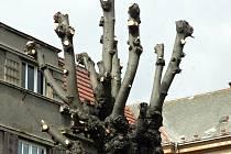 Strom po takzvaném hlavovém řezu. Ilustrační foto