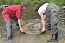 Pracovníci muzea vytahují z řeky 90 milionů let staré zkameněliny.