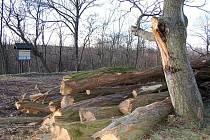 Zbytky po kácení v chráněném území u Lipence