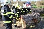 Několik stromů museli ze silnic odstraňovat také postoloprtští hasiči.