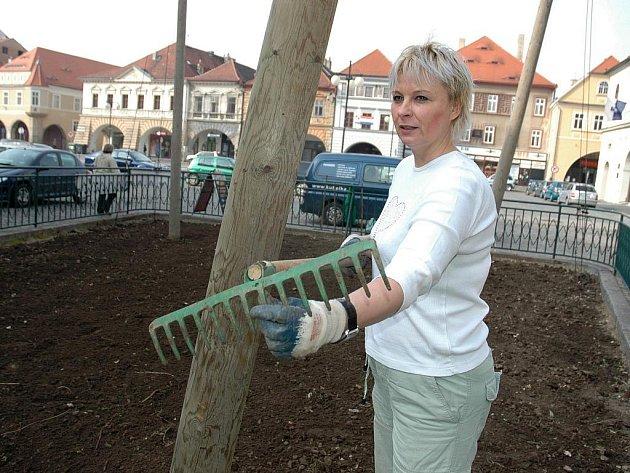Alexandra Oppelová hrabe půdu na chmelničce v centru Žatce.