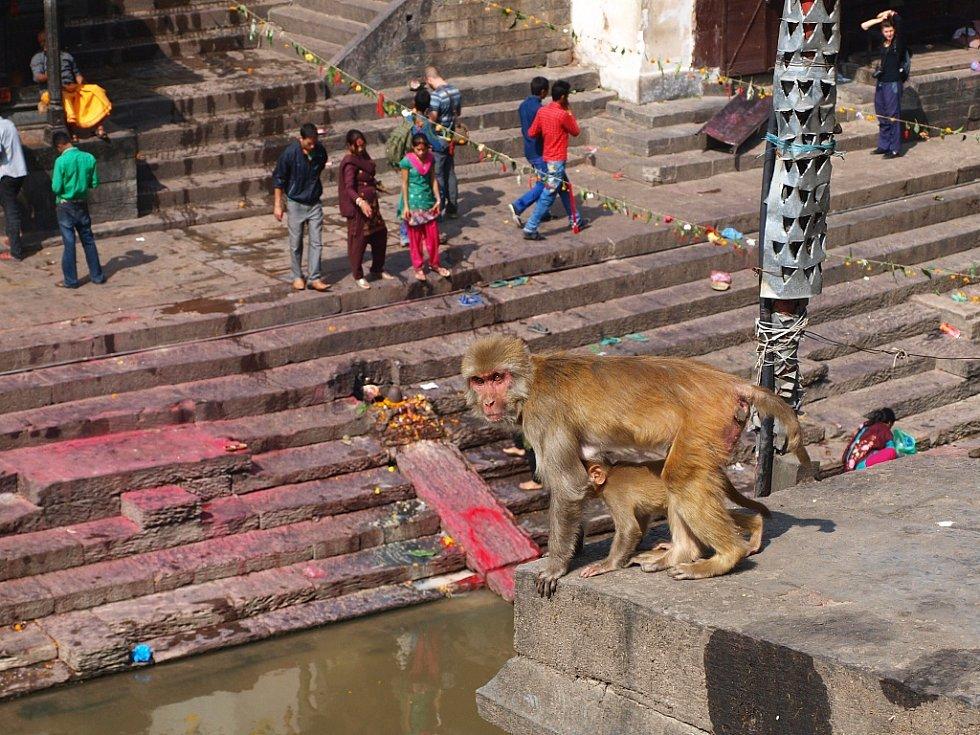 Paty nebožtíků se nejprve ponoří do posvátné řeky Bágmatí, aby se duše osvobodila. K tomu slouží plochy ve schodišti